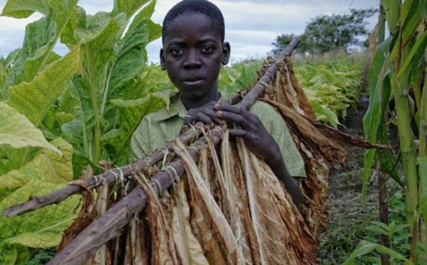 Djeca »mašine« za sticanje bogatstva