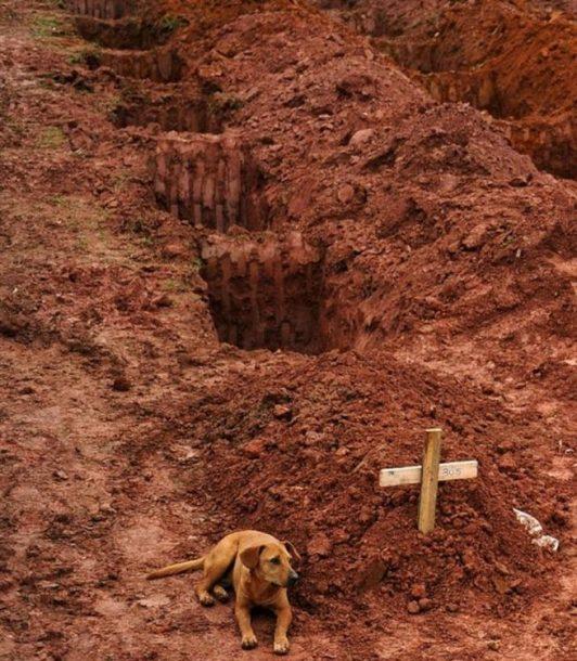 """Pas """"Leao"""" sjedi pored groba svog vlasnika koji je stradao zbog posljedica razprnog klizišta, Rio de Žaneiro, 2011."""