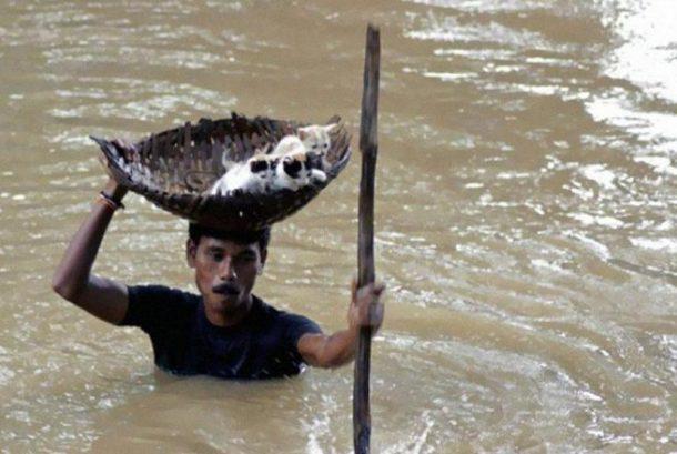 Tokom velike poplave u Indiji jedan hrabri seljak spasio je brojne mačke lutalice tako što ih je nosio u košarama na glavi.