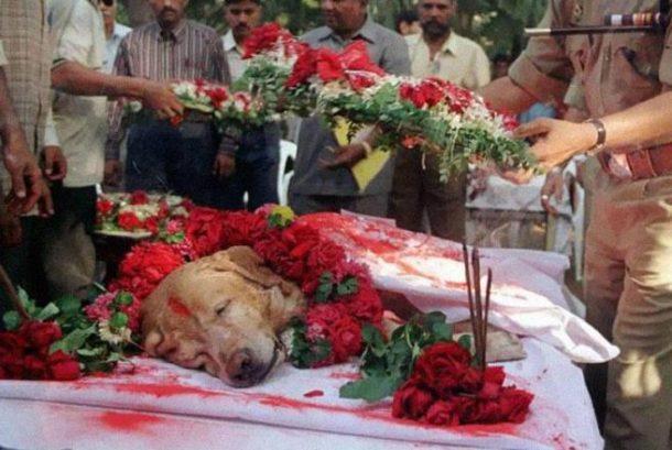 Zanjeer, pas koji je spasio hiljade života tokom serijskih eksplozija u martu 1993. godine. Pokopan je sa punim počastima 2000. godine.