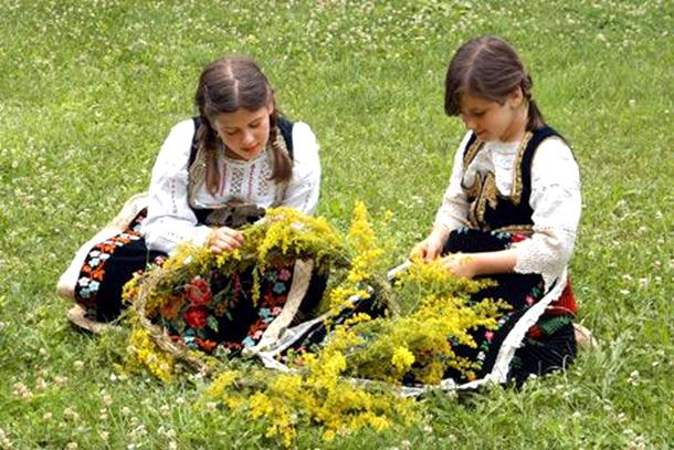 Mnogi otišli u ivanjdansku berbu trave ive