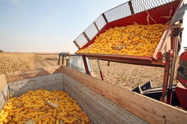 Berba kukuruza na teritoriji Grada Zvornik