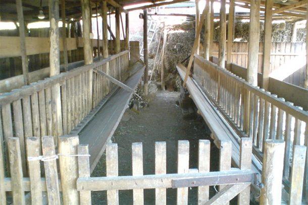 Photo of Ukrali cijelu štalu u selu kod Vojnića