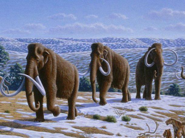 Runasti mamut na pragu