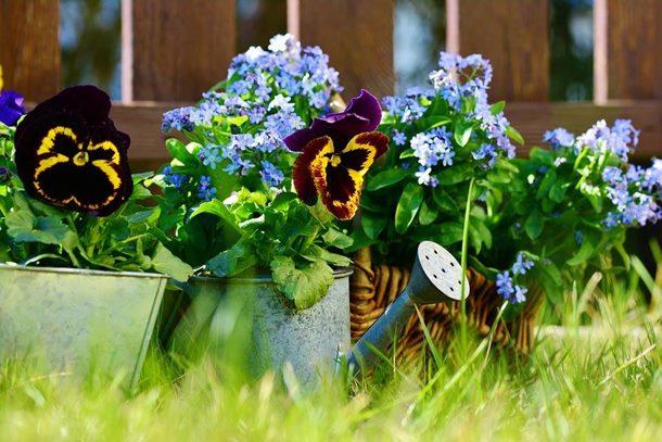 Vrtlarski radovi u maju – kako da vašem cvijeću obezbjedite optimalnu njegu
