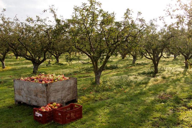 Photo of Ministarstvu poljoprivrede RS mišljenje s rezervom: Za obaveze fali 31,8 miliona KM