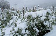 Srebreničkim voćarima aprilske hladnoće nanijele štetu od 1,1 milion KM