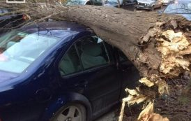Zvornik: Vjetar oborio stablo na automobile