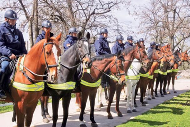 Photo of Policija u RS biće opremljena i konjima
