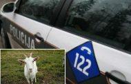 Muškarac iz Kladnja silovao kozu