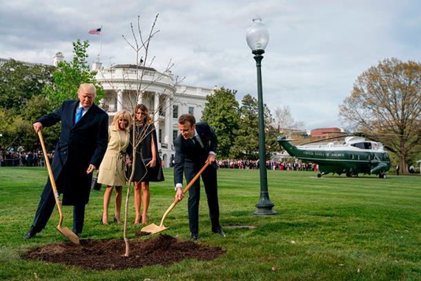 Nestalo stablo koje su Makron i Tramp zasadili u dvorištu Bijele kuće