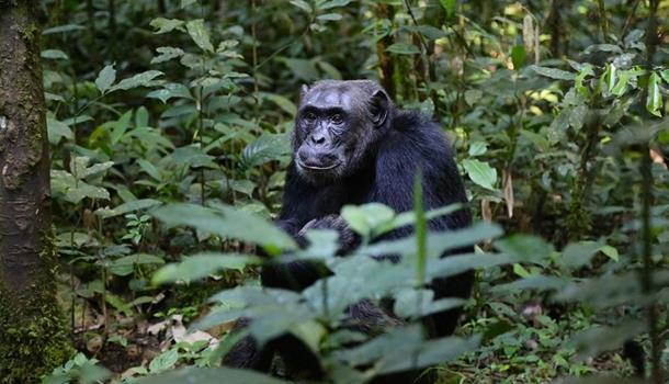 Photo of Potraga za majmunom koji je ukrao bebu