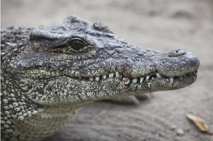 Photo of Mnogi se plaše ovih životinja, ali oni su njegovi ljubimci (video)