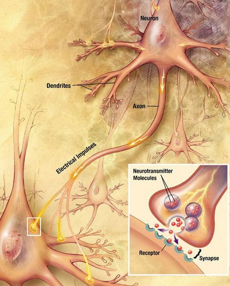 Photo of Naučnici otkrili novi centar za bol u mozgu
