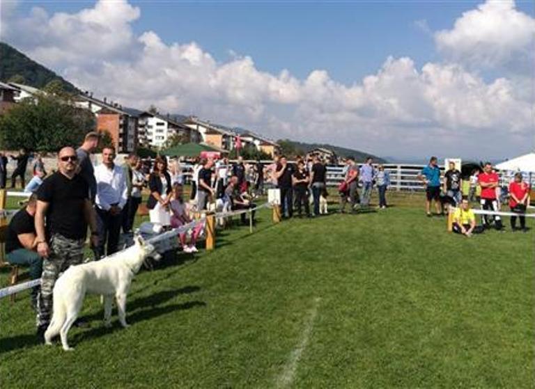 Vlasenica: Održana izložba pasa svih rasa