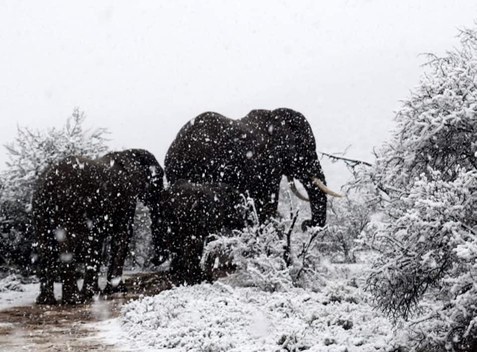 U Južnoj Africi pao snijeg (video)