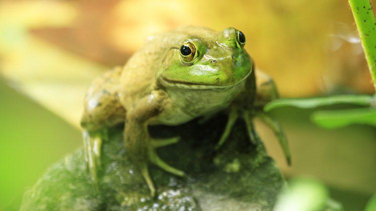 Photo of U svježoj salati pronašli živu žabu