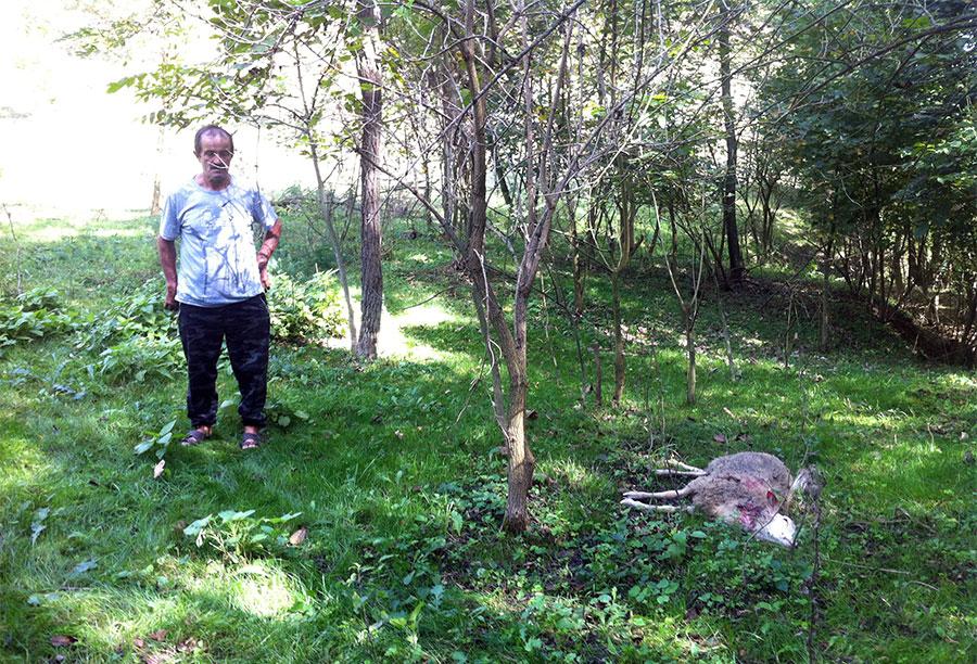 U Baljkovici psi lutalice zaklali tri ovce i dva jagnjeta (foto)