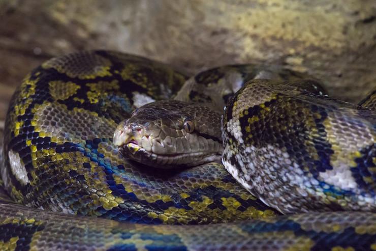 Putnik u avionu nosio sa sobom 20 zmija