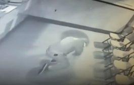 Provalnik bacio ciglu na prozor, ona se odbila i oborila ga na zemlju (video)