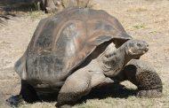 Ukradene 123 džinovske kornjače sa Galapagosa