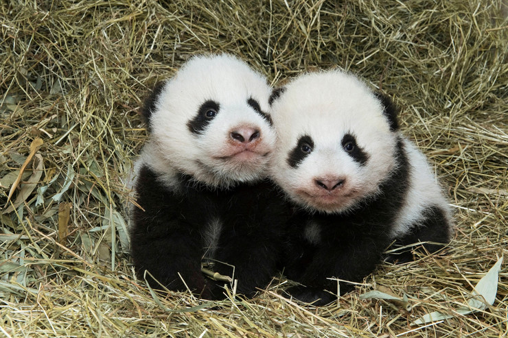 Photo of Svakog dana nestane 100 životinjskih vrsta