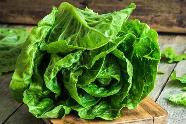 Sve dragocjenosti zelene salate