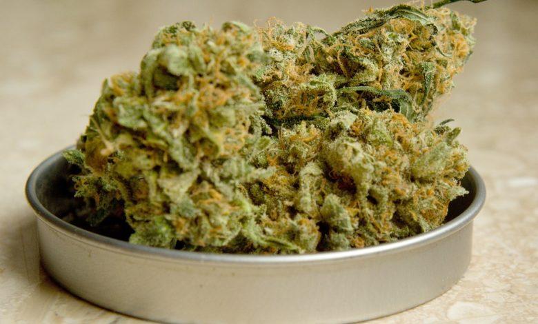 Photo of Amerikanci gomilaju zalihe marihuane
