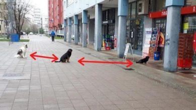 Photo of Zanimljiv prizor iz Zagreba: Psi se pridržavaju mjera opreza za suzbijanje širenja korona virusa  (FOTO)