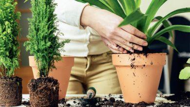 Photo of Oslobodite se napetosti uz biljke: Presadite saksijsko cvijeće