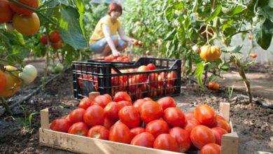 Photo of Siguran put do tržišta: Neće propasti ni kg domaćeg povrća