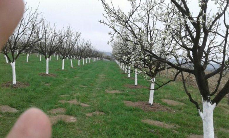 Photo of Ministarstvo poljoprivrede: Zaštititi voćke od sutrašnjeg mraza