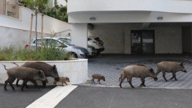 Photo of Divlje životinje uživaju u slobodi u utišanom svijetu