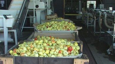 Photo of Počinje otkup povrća