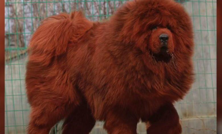 Photo of Najskuplji pas na svijetu košta skoro dva miliona dolara