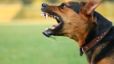 Photo of U Jagodini pas izujedao sedam ljudi