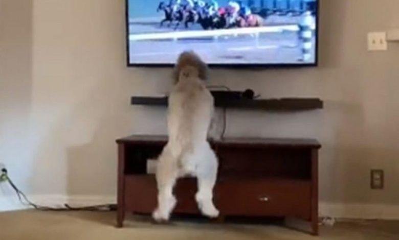 """Photo of Reakcija psa na konjske trke nasmijala mnoge: """"Plačem od smijeha"""""""
