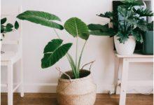 Photo of Zašto je važno da čistimo kućne biljke?