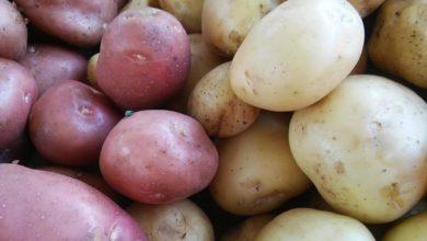 Photo of Greška koju svi prave sa krompirom, tako podiže šećer i goji