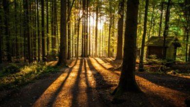 Photo of Ministarstvo izmjenilo Pravilnik o uslovima korišćenja i načinu sakupljanja ostalih šumskih proizvoda