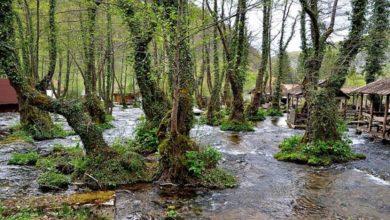 Photo of UNESKO proglasio prašumu Janj prirodnim dobrom od svjetskog značaja