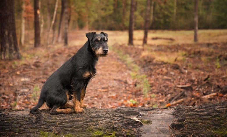 Photo of Izgubili psa dok su bili na odmoru, a on prešao 380 kilometara kako bi im se vratio