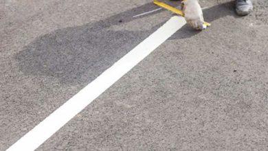 Photo of U četvrtak kod B-11, B-12 i B-13 obilježavanje parking mjesta