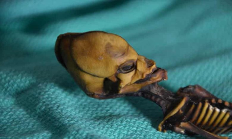 """Photo of Naučnici konačno riješili misteriju """"vanzemaljske mumije"""" iz Čilea"""